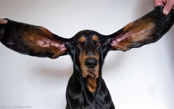 سگی که در گینس ثبت شد